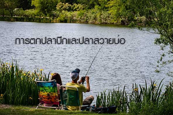 การตกปลาบึกและปลาสวายบ่อ