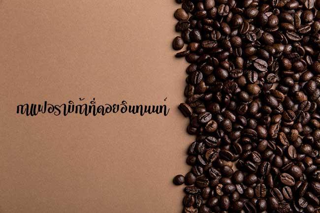 ยิ่งสูง ยิ่งหอม กาแฟอราบิก้าที่ดอยอินทนนท์