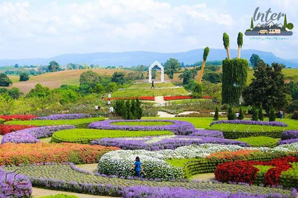 อยากดูดอกไม้หน้าหนาว สวยงามบานสะพรั่ง ต้องมาที่นี่ ที่เที่ยว ดอกไม้หน้าหนาว