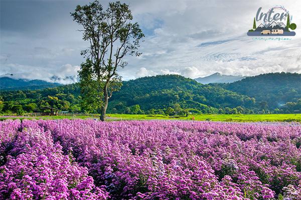เที่ยวเชียงใหม่ 2020 รวม 4 ที่เที่ยว ทุ่งดอกไม้ ถ่ายรูปสวย ประจำปี 2563 ที่เที่ยว ที่เที่ยวไทย ที่เที่ยวเชียงใหม่ เที่ยวทุ่งดอกไม้เชียงใหม่