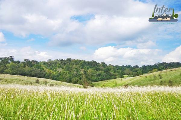 เที่ยวเขาใหญ่ รวม 4 ที่เที่ยวเขาใหญ่ 2021 ที่เที่ยวธรรมชาติ อากาศบริสุทธิ์ แถมถ่ายรูปสวย ที่เที่ยว ที่เที่ยวไทย ที่เที่ยวโคราช ที่เที่ยวเขาใหญ่