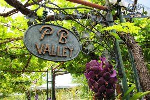 แวะจิบไวน์ เที่ยวไร่องุ่น ที่พีบีวัลเล่ย์ เขาใหญ่ ไวน์เนอรี่ ที่เที่ยว ที่เที่ยวไทย ที่เที่ยวเขาใหญ่ เที่ยวไร่องุ่นพีบีวัลเล่ย์
