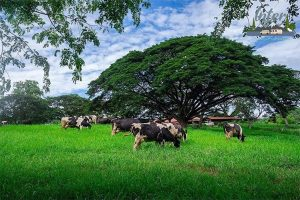 เที่ยวไทย รวม 4 ที่เที่ยวสไตล์ฟาร์ม เที่ยวแบบครอบครัว ทำตัวสโลว์ไลฟ์ที่ฟาร์มใกล้กรุง ที่เที่ยว ที่เที่ยวไทย ที่เที่ยวสไตล์ฟาร์ม